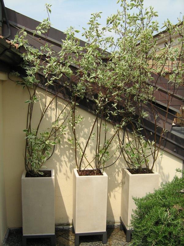 progettazione giardini e terrazzi