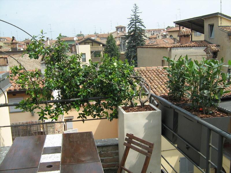 Progettazione giardini e terrazzi for Piante per terrazzi
