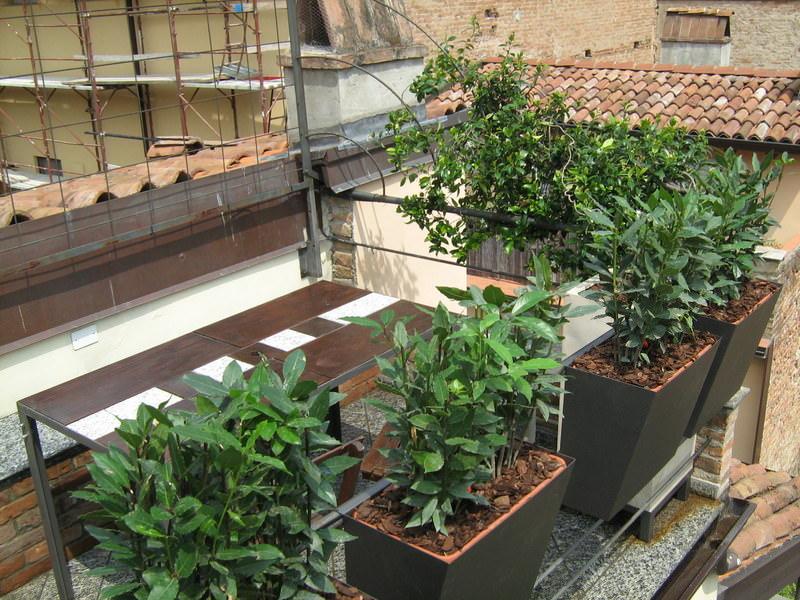 Progettazione giardini e terrazzi for Progettazione giardini lavoro